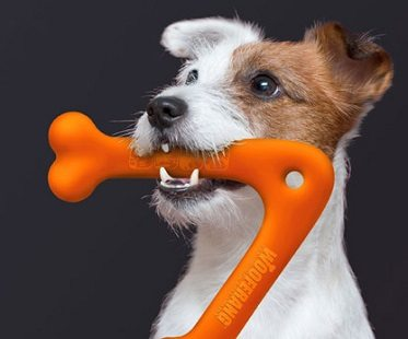 dog-boomerang-toy